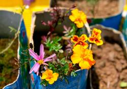 Foto ilustrativa de una flor